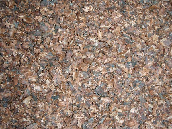 Coque de fève de cacao